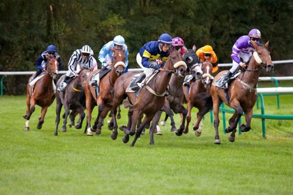 chevaux-de-course